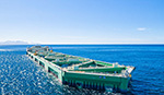 Will offshore aquaculture bring evolution or revolution to the seafood industry?