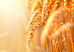 Life cycle assessment shows reduced carbon footprint in stored grains with mold inhibitor