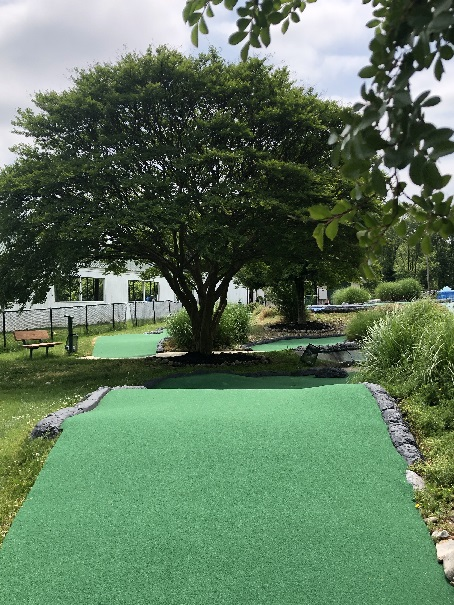 natural tree on mini golf course