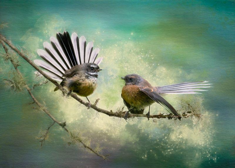 Two pīwakawaka on a branch sharing a secret