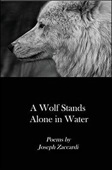 Wolf Stands Alone in Water.