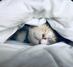 Cat with eyes closed under white bed covers