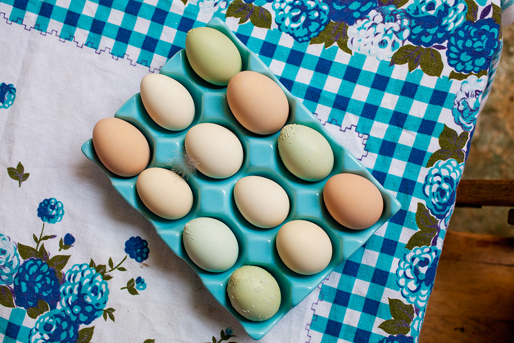 Creative in Place: Eggsactly Photographer Susan Seubert