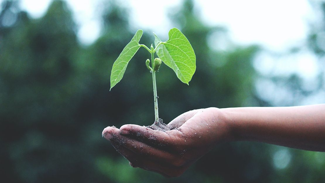 Cupped hand holding dirt in the palm with a green plant with two leaves growing out of the soil. Background is blurred trees.