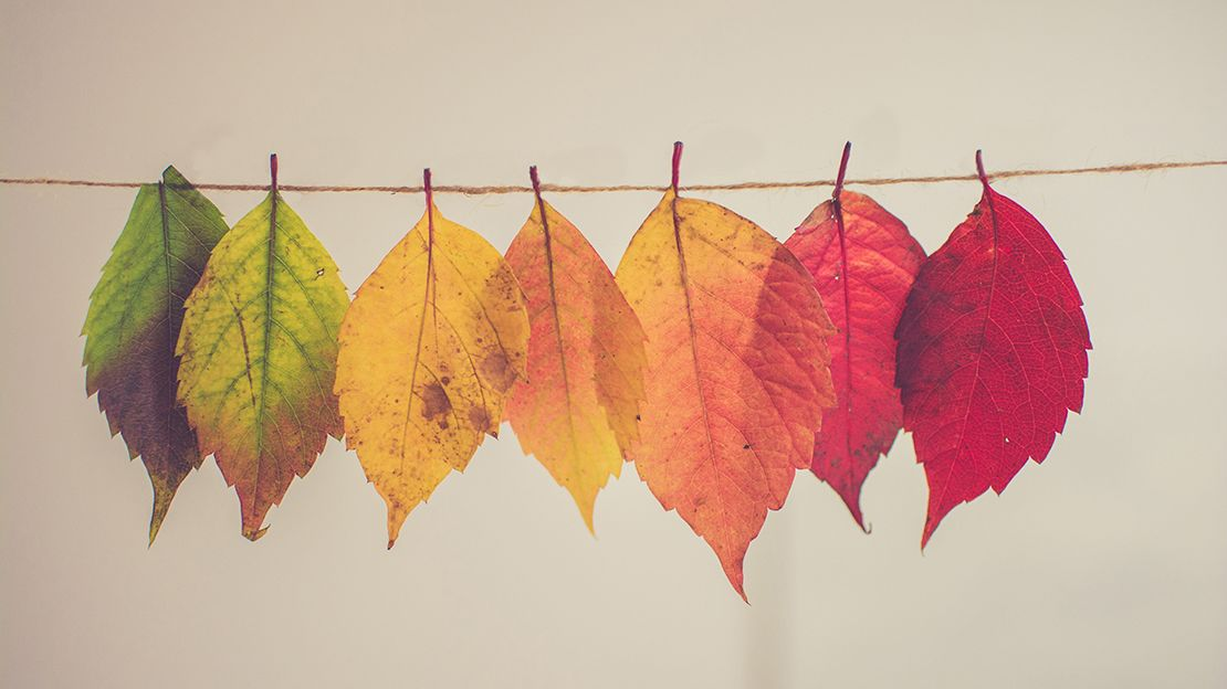 Seven leaves hanging on a string, each a different colour, from green on the left, yellows in the middle and red on the right