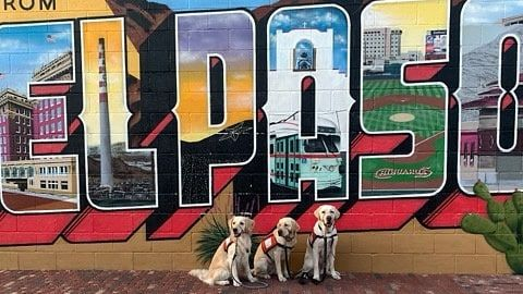 3 Facility Dogs with El Pas Mural