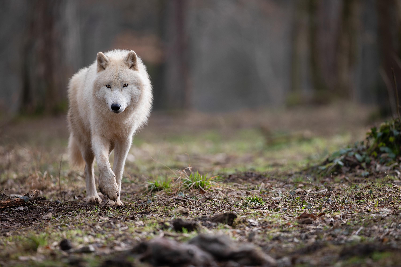 Franc succès pour le Parc Animalier des Grottes de Han