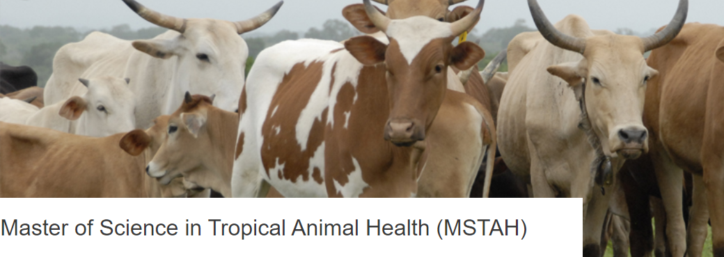 Maestría en Ciencias en Salud Animal Tropical - Instituto de Medicina Tropical de Amberes, Bélgica