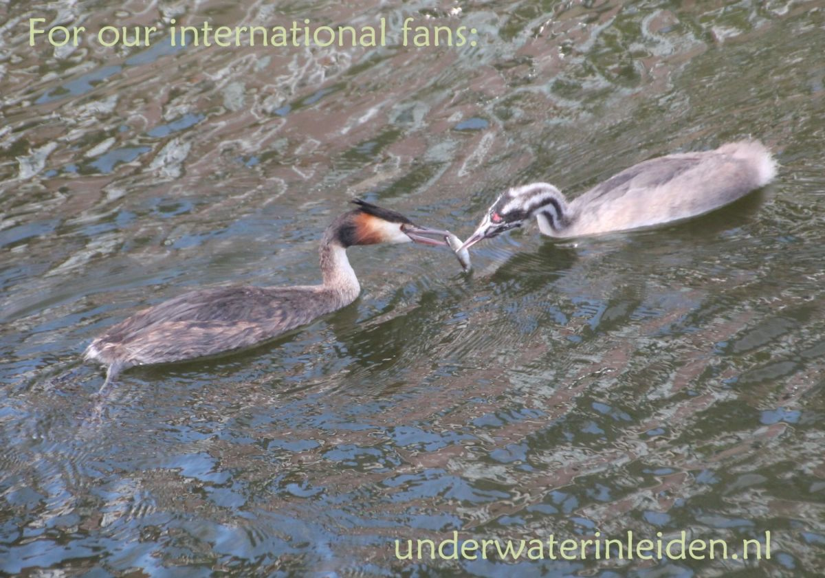 English page with detailed information about Under water in Leiden
