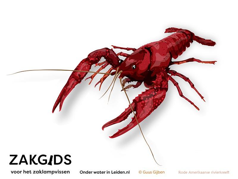Rode Amerikaanse rivierkreeft Sjaak, vereeuwigd door Picture Partners en Guus Gijben