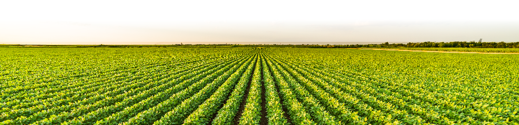 Crop biotechnology continues to provide higher farmer income and significant environmental benefits1