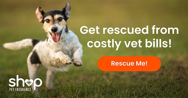 Here's how you canalways afford to give your dog the best...