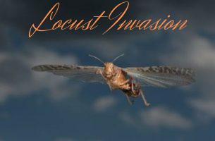 Locust Invasion - Lessons Learnt