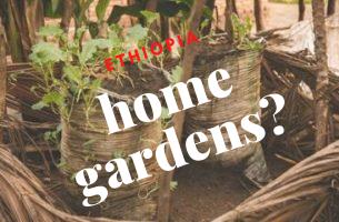 Home Gardens in ETHIOPIA