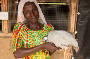 Guinea Fowl Farming Opportunity Unpacked