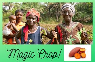 The MAGIC of Sweet Potatoes