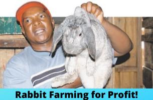 Rabbit Farming for PROFIT!