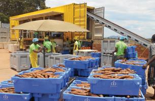 DADTCO Cassava Processing Unit