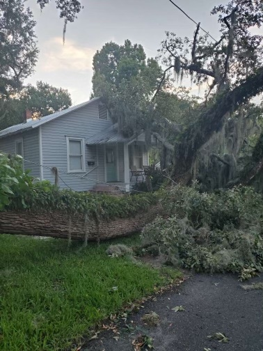 The giant oak tree limb that fell in front of the Kerouac House in Orlando, Florida.