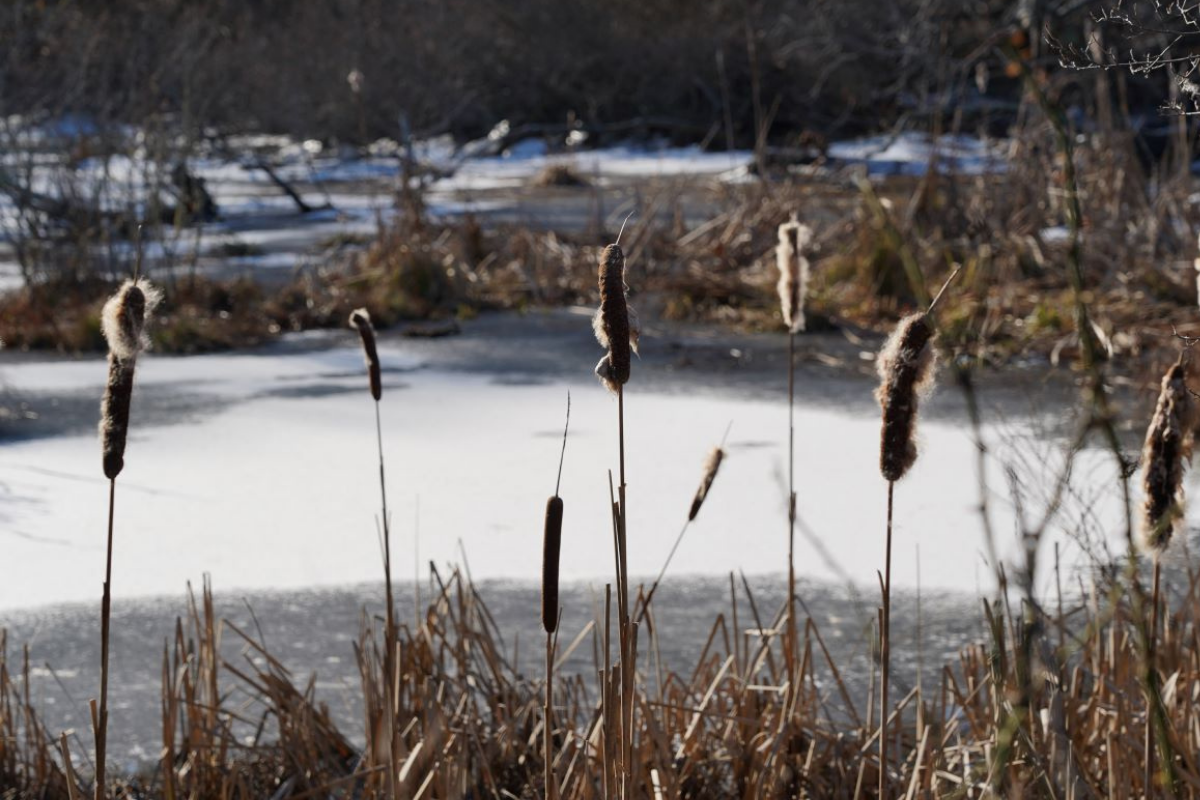 Frozen marshland on the Cape