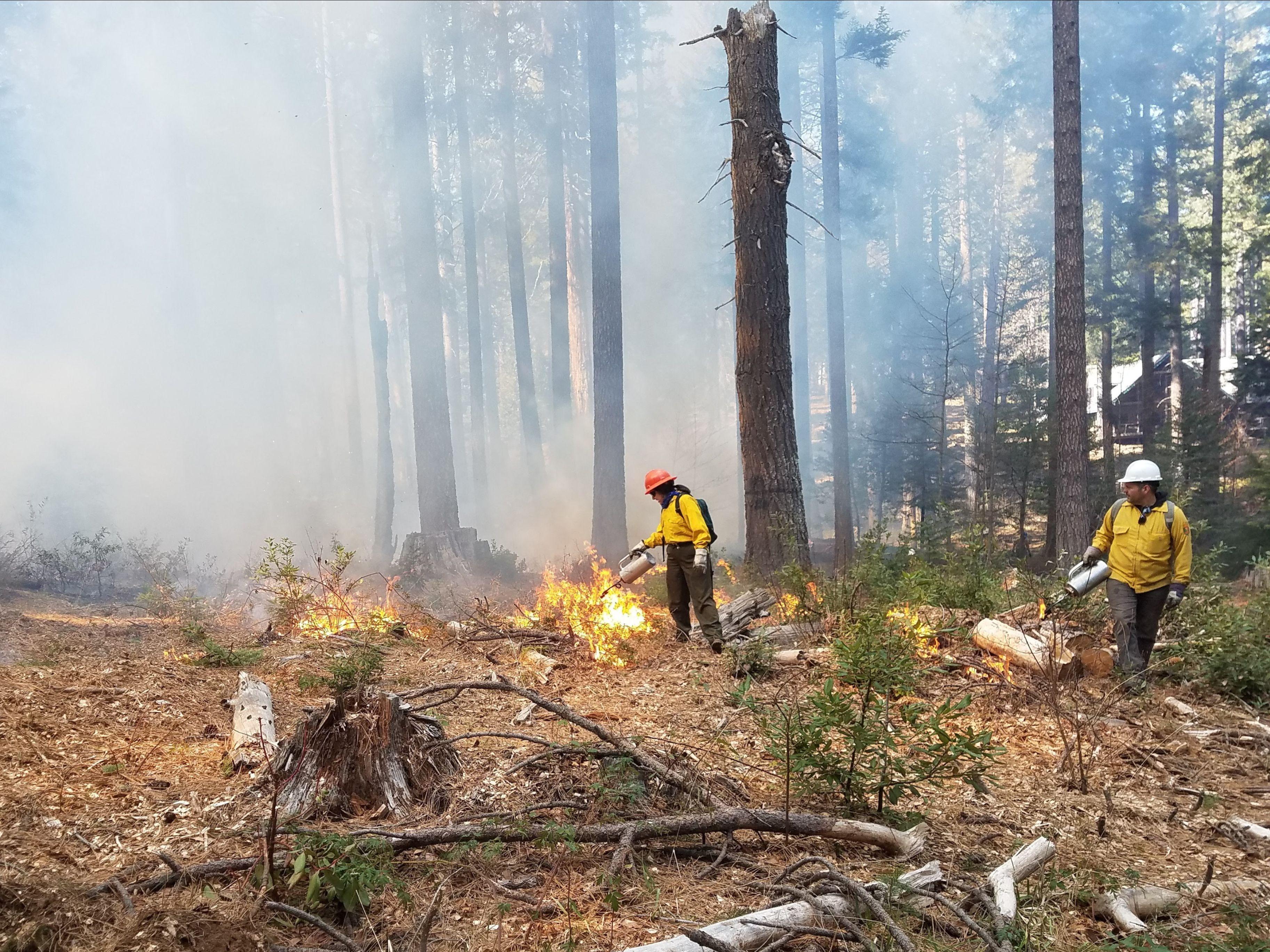 Prescribed fire in Feb 2020
