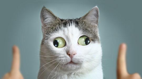 Kat die twee kanten uitkijkt