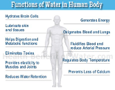 image of a person with information on how water functions in the body listed around it