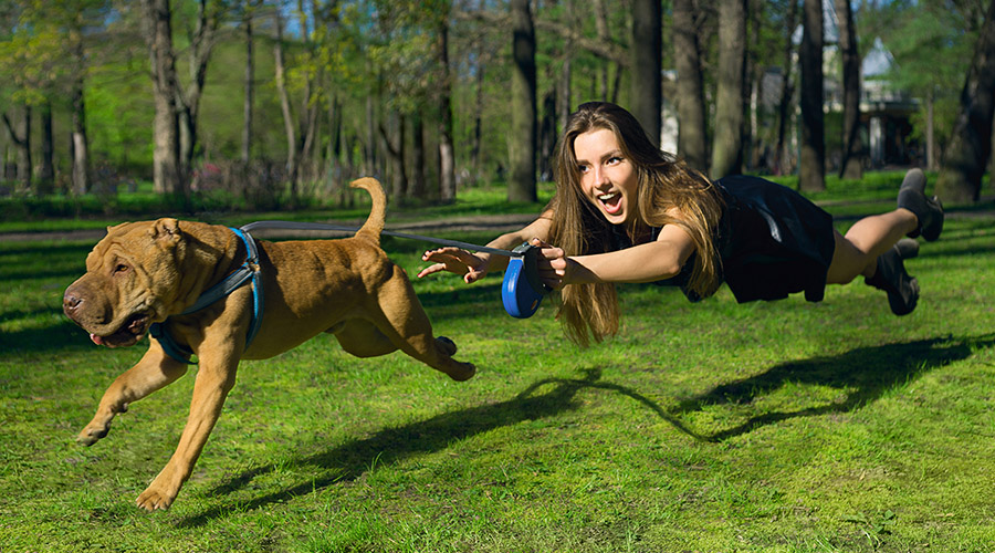 Dog excitedly pulling girl through the air during a park walk