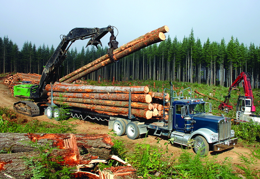 Truck gets timber loaded onto the back