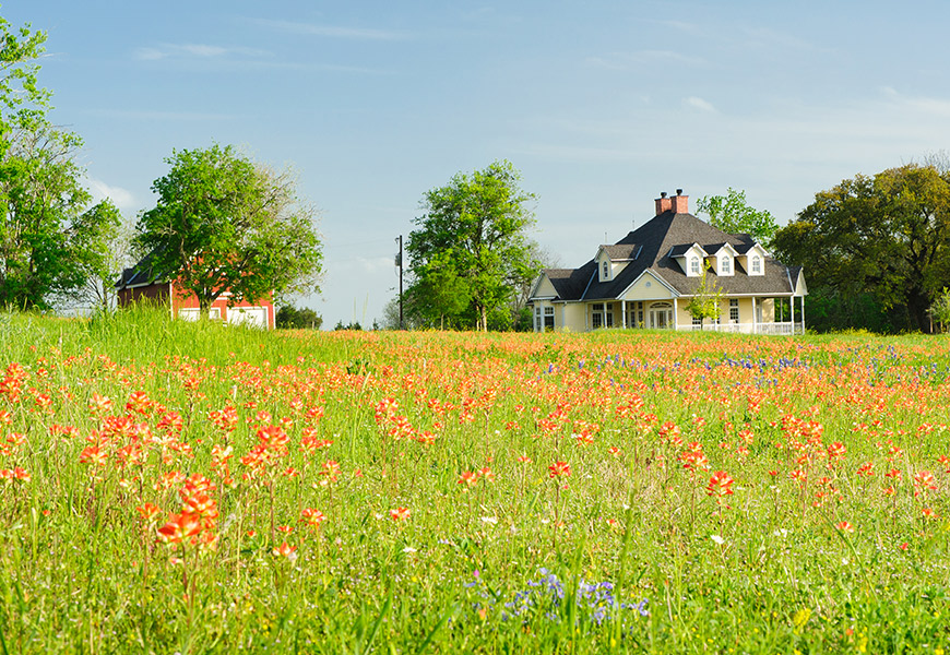 Home in field with bluebonnets and indian paintbrushes
