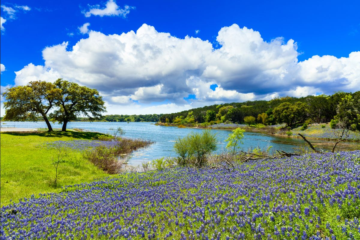 Hill country lake with bluebonnets