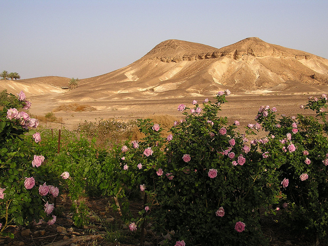 Welcome to Kibbutz Neot Semadar best known for its array of organic products.