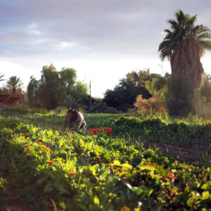 Organic farming allows for a variety of fields and crops to be grown without the use of toxic chemicals