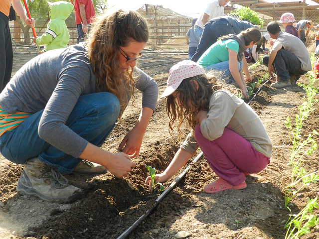 Volunteers in Kibbutz Neot Semadar