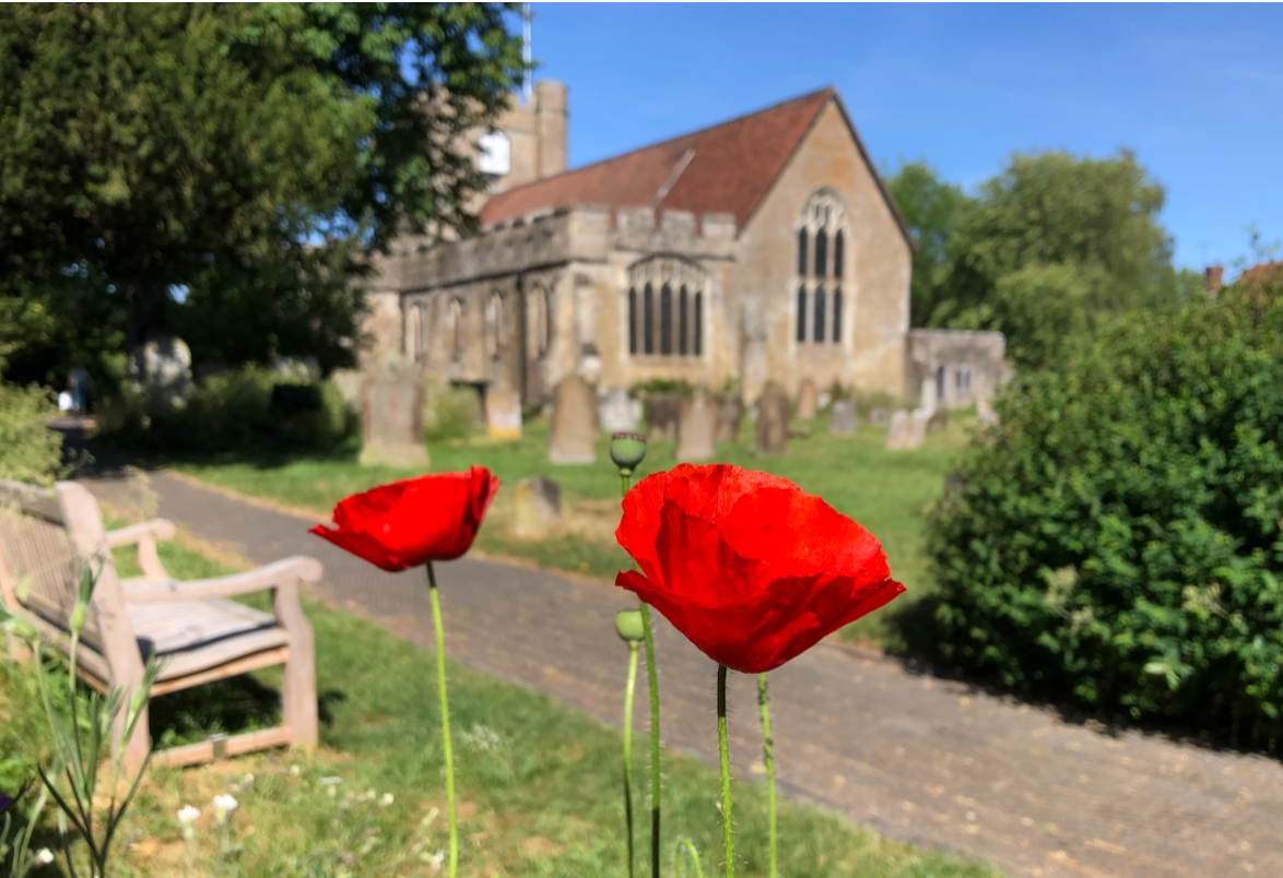 Poppies in Headcorn churchyard