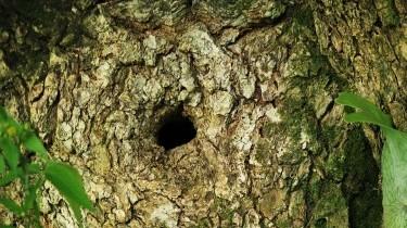 Tripofobia: come si cura la paura dei buchi