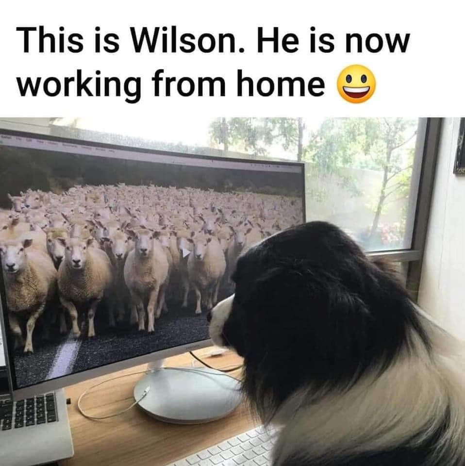 Wilson works from home
