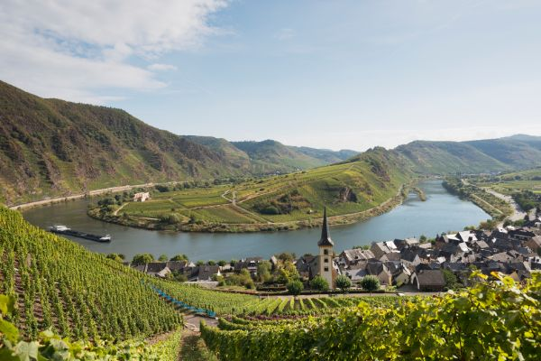 Mosel wines