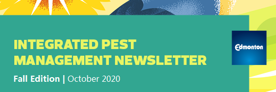 Pest Management Newsletter Oct 2020
