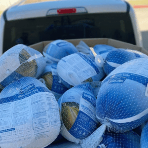Truck of turkeys