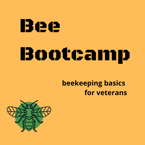 Bee Bootcamp logo in green, black, gold