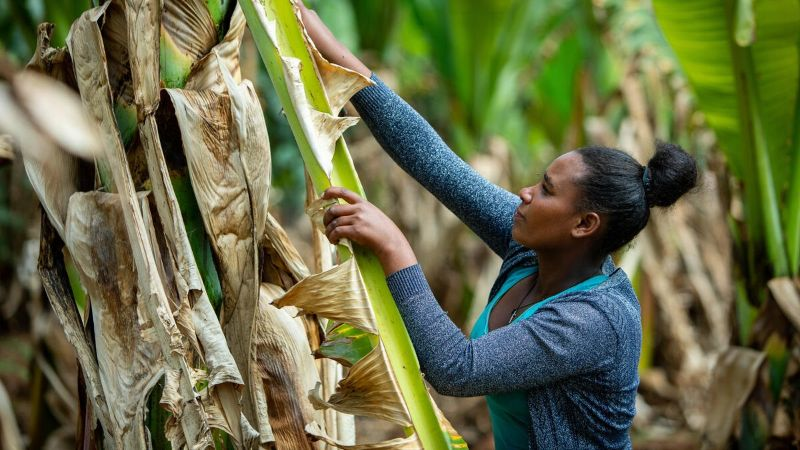 Photo of a woman farming