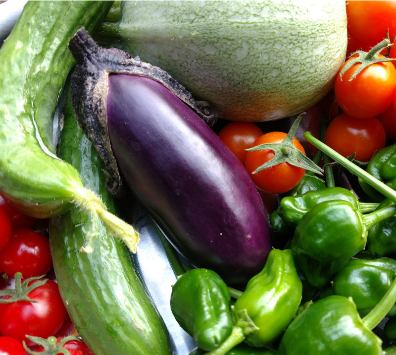 cucumbers, eggplant, padron peppers, sungold tomatoes | Photo credit: UC Master Gardener Joy Agcongay
