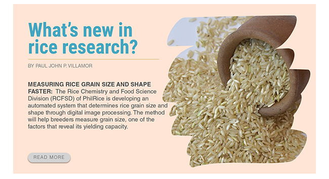 measuring-rice-grain-size-and-shape-faster