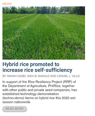 hybrid-rice-promoted-to-increase-rice-self-sufficiency/