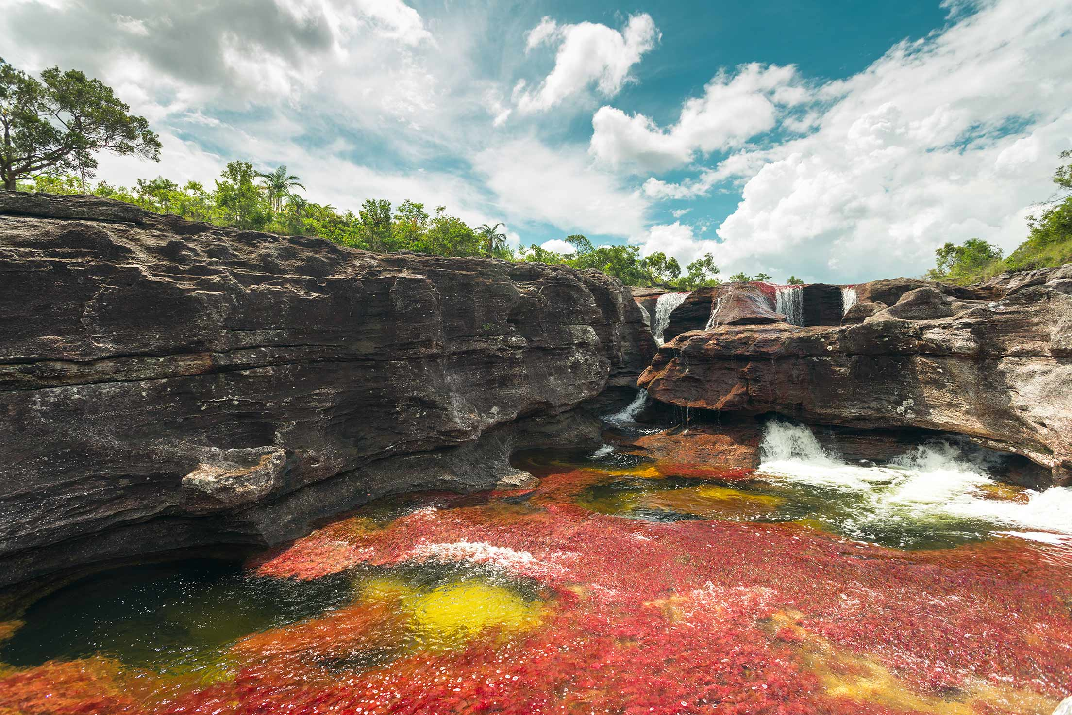Caño Cristales | Photo by Mario Carvajal