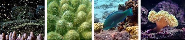 herbivorus fish do a great job