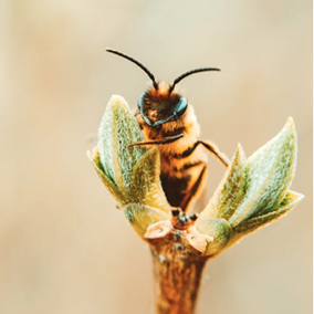 Bee in a plant