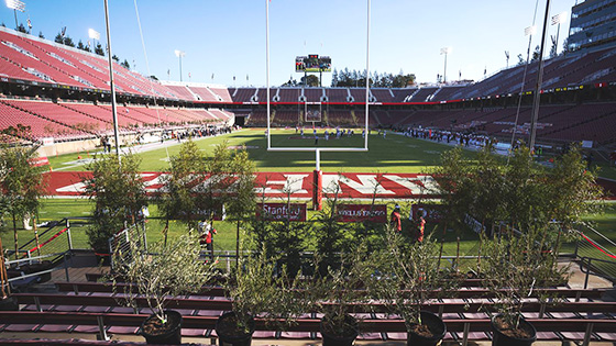 Trees in Stanford Stadium