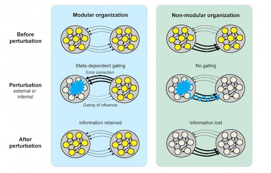 Modular memory networks